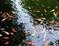 子非鱼,焉知鱼之乐