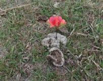 4月沙旁巢顶之旅
