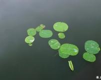 同大家分享现时的龙湖